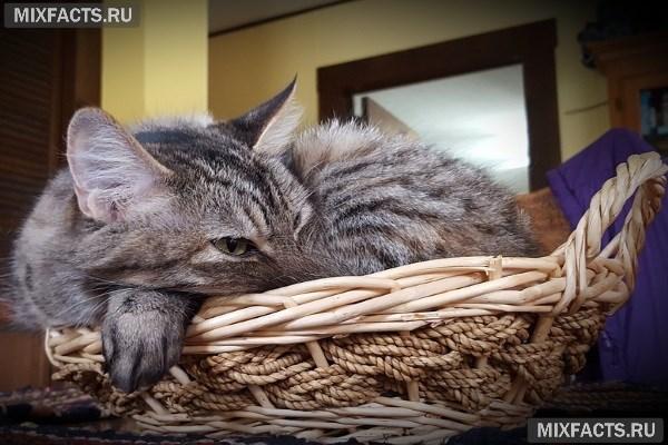 Как выбрать переноску для кошки