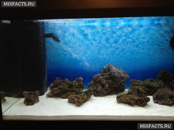 Виды грунта для аквариума с описанием и ценами