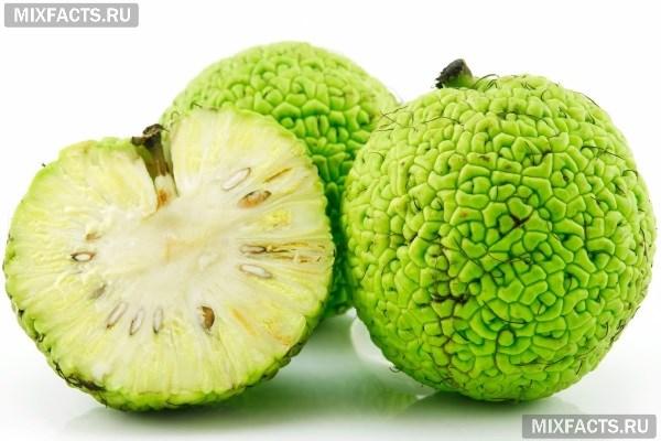 Рецепт приготовления адамового яблока для суставов тактика лечения оа коленного сустава