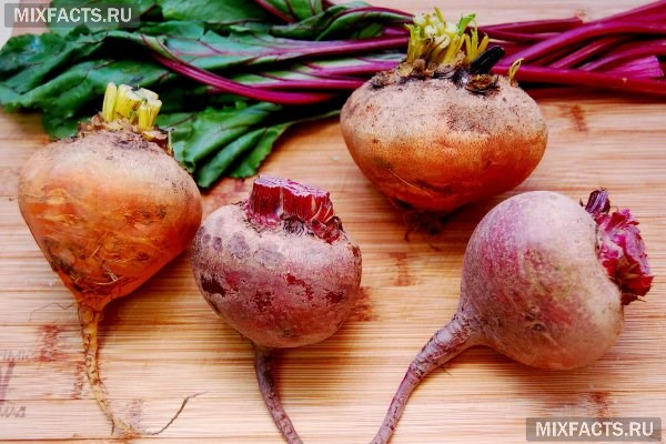 Чем полезна морковь и свекла?