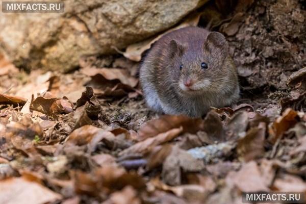 Приманка для мышей в мышеловку: что любят мыши, какая приманка лучше