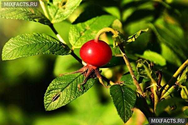 Польза и вред аскорбиновой кислоты для организма