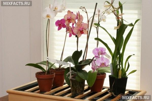 Цветущие комнатные растения фото и названия уход за ними 82