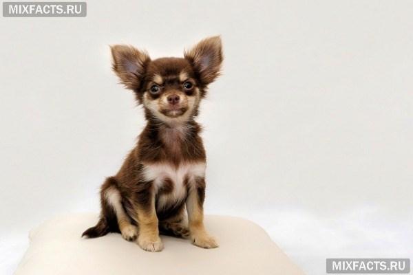 маленькая порода собак название