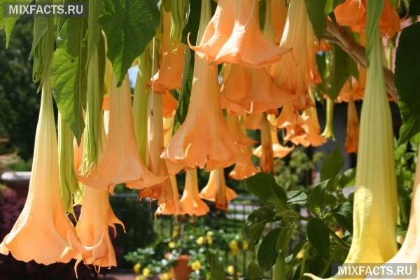 Самые красивые цветы в мире – название с фото