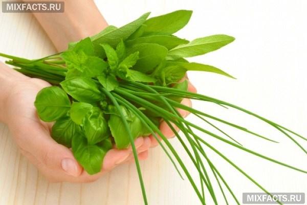 Какие травы самые эффективные для похудения