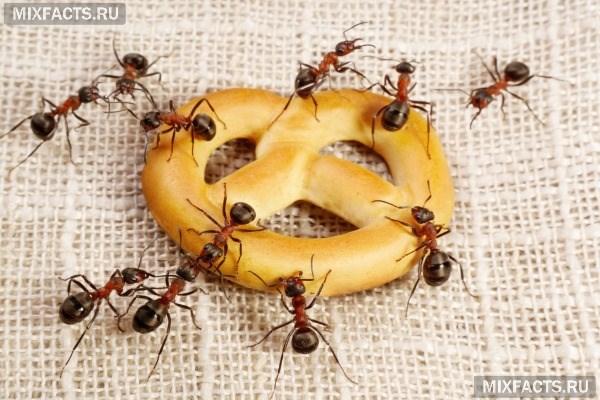 Муравьи в доме: средства для избавления от насекомых навсегда