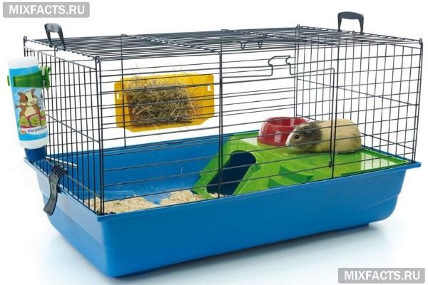 Как ухаживать за морской свинкой в домашних условиях – кормление, содержание, потомство