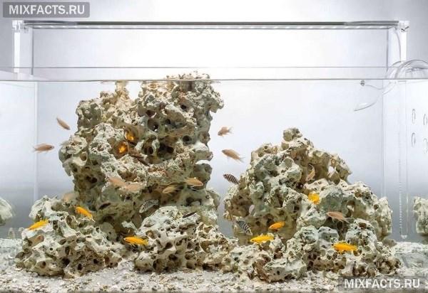 Какие камни можно использовать в аквариуме и как за ними ухаживать?