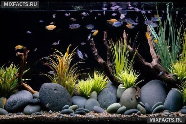 Живые камни для аквариума. - Дом знаний