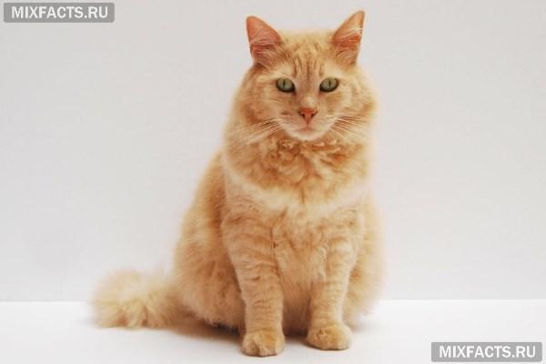 Какой наполнитель для кошачьего туалета лучше выбрать по составу и варианту использования?