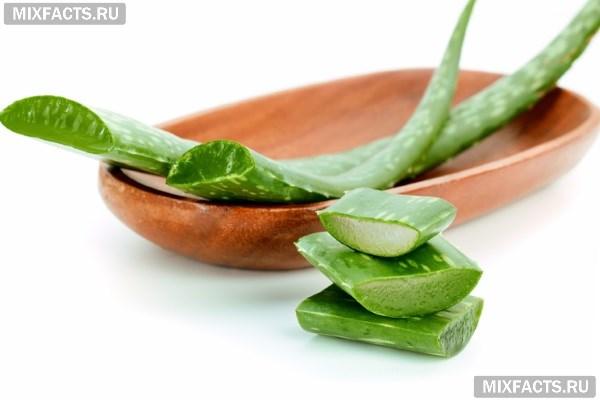 Рецепты от кашля с алоэ в домашних условиях