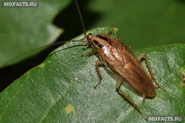 Как избавиться от мелких тараканов в квартире