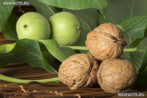 Рецепты настоек на грецких орехах — pic 2
