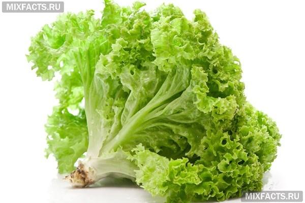 Листья салата: польза и вред, состав и свойства