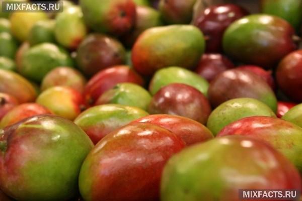 Масло манго – полезные свойства и применение в косметологии