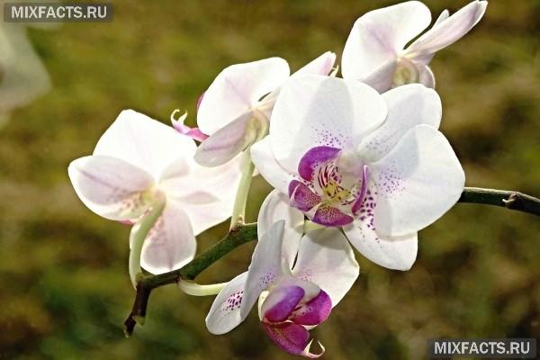 Мелкие жучки в орхидее