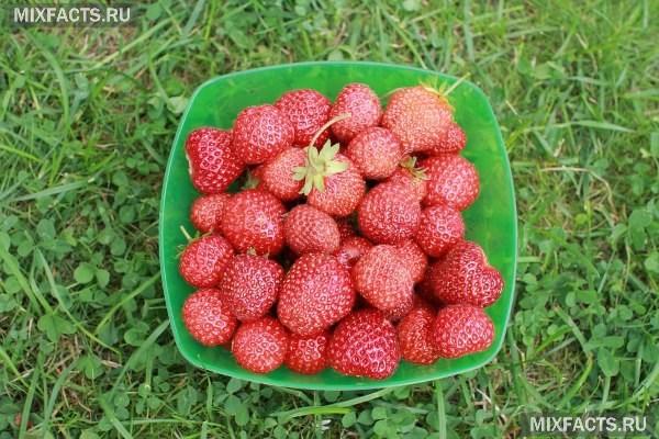 Минеральные удобрения - виды и характеристика. Какие удобрения вносить в почву весной и осенью?