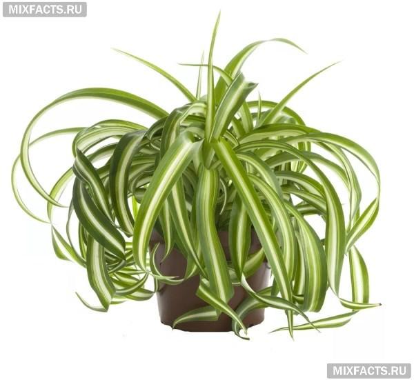 Самые полезные растения для человека, которые можно держать дома