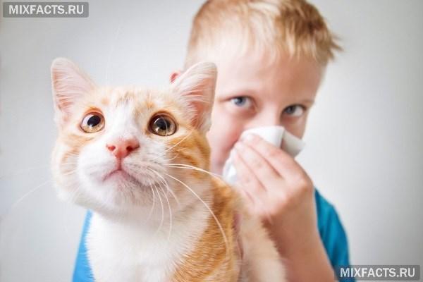 Кошки без шерсти порода, фото, цена, как их называют, отзывы, где купить