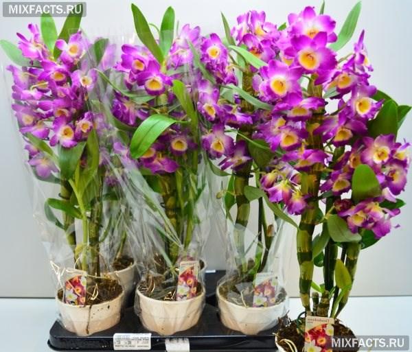 Виды орхидей с фото и названиями по листьям
