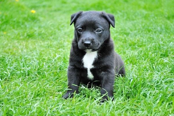 Гипоаллергенные собаки с фотографиями и названиями