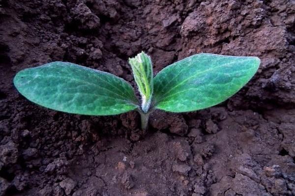 Подкормка дрожжами растений и овощей – особенности и рецепты удобрения