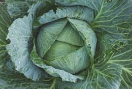 В чем польза капусты для похудения и какую капусту можно есть на диете?