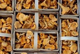 Выращивание грибов во домашних условиях пользу кого новичков
