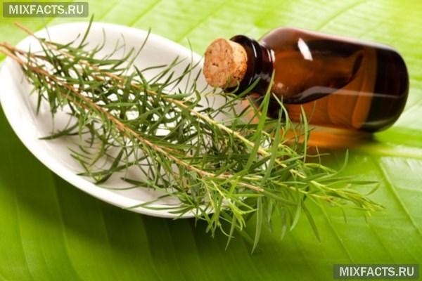 Масло чайного дерева: отзывы и свойства