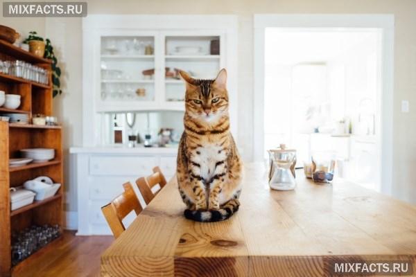 из чего делают кошачий корм – состав сухого и консервированного продукта